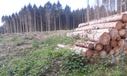 """Umweltkatastrophe: Entwaldung in Nordeuropa hat um 49% zugenommen, um """"CO<sub>2</sub>-Ziele zu erreichen"""""""