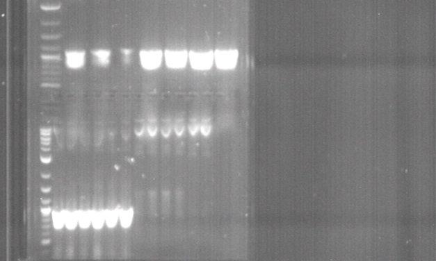 Die Täuschung mit den Corona-PCR-Tests