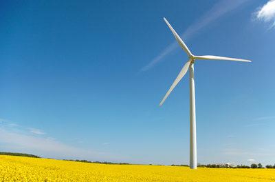 Windmühlen richten unter Vögeln schreckliche Massaker an