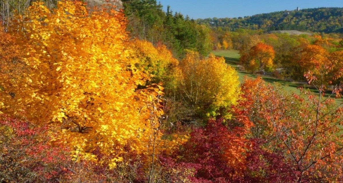 Oktober 2020 – Laut DWD zu nass, zu wenig Sonne, trotzdem zu warm.