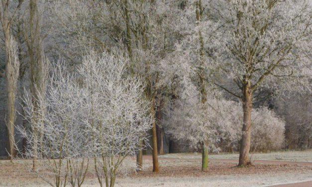 Winter 2020/21 – darf es diesmal etwas kälter sein?