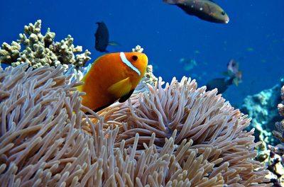 Die Wissenschaft ist marode, nicht das <i>Great Barrier Reef</i>