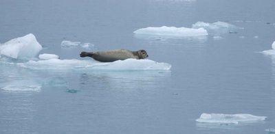 Die arktische Eisausdehnung zum Jahresende 2020