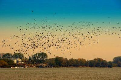 Tausendfacher Vogeltod durch Herbstkälte – Medien machen globale Erwärmung dafür verantwortlich