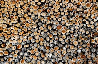Wie das Wettrennen um ,Erneuerbare' die europäischen Wälder niederbrennt