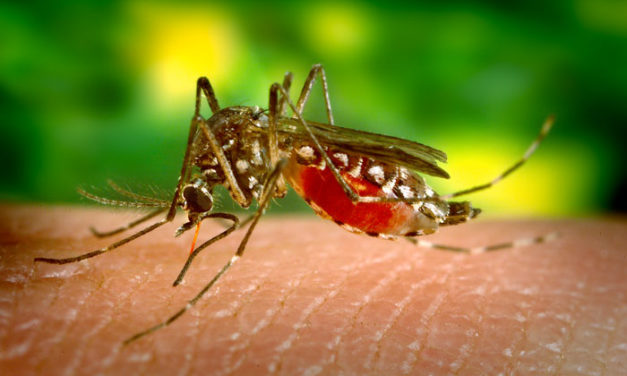 Virologin: Klimawandel erzeugt Pandemien – durch Waldzerstörung, statt Waldvermehrung