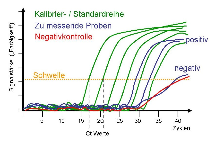 COVID-19 und Kreationismus: Widerlegen Borger et al. die Drosten-PCR?
