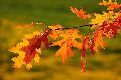 Genaue Berichterstattung fällt wie Blätter im Herbst