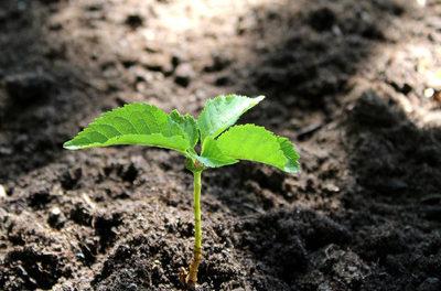 PLANT FOR THE PLANET  Wie die Fridays for Future-Hintermänner die Klimagläubigen hinter die Fichte führen