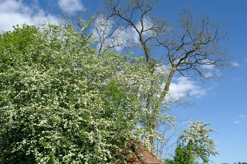 Der Monat Mai über die letzten 240 Jahre: Keine CO<sub>2</sub>-Treibhauswirkung erkennbar