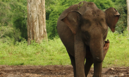 Gleichzeitiges Aufblühen von Umwelt, Natur und Wirtschaft: Ein Beispiel aus Indien