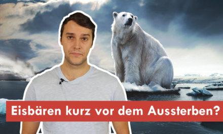 Klimawissen – kurz&bündig: Stehen die Eisbären wirklich kurz vor dem Aussterben?
