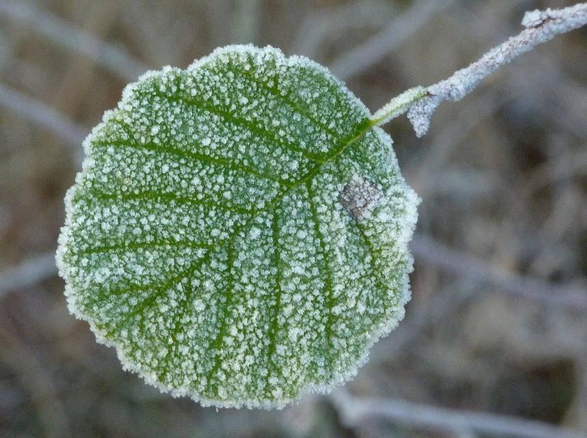 Klima-Eilinformation: Erster Herbstfrost 2021 in Deutschland viel zeitiger als normal eingetreten