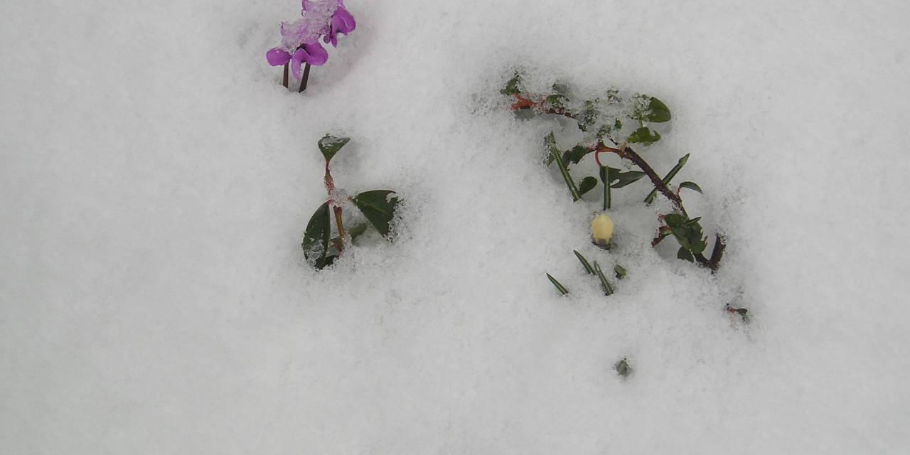 """""""Schneemassensaison"""" der nördlichen Hemisphäre beginnt mit 250 Gigatonnen über dem Durchschnitt von 1982-2012 – PLUS eine Betrachtung dazu von Dipl.-Met. Christian Freuer im Anschluss an den Beitrag"""